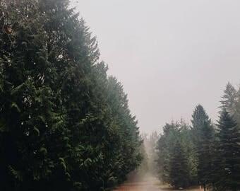 Foggy Forest Olympic National Park   Washington   Fine Art Print