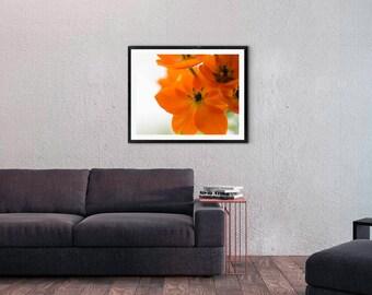 11x14 Macro Orange Flower Fine Art Print