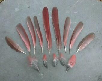 15 Cardinal Feathers