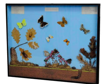 a great vintage school teaching display of the insects of the forest edge