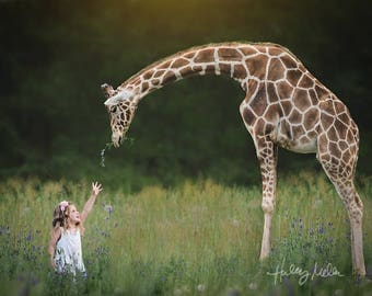 Giraffe and Field PNG Digital Backdrop/Background - Photography Prop