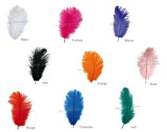 """""""Ostrich"""" little feather env.25cm (color choices)"""