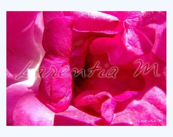 30X40cm heart pink rose taken in the morning dew