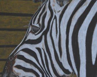 """Zebra coloured pencil original art digital download 5x7"""""""