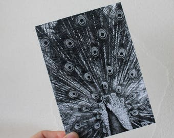 "Postcard ""NB Peacock"""
