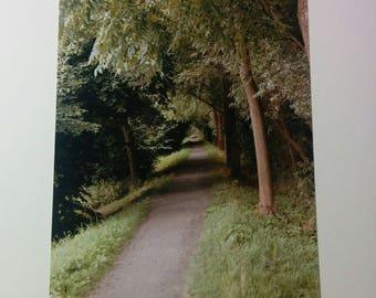 Forest path to the unknown 10x15 foto print