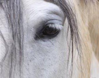 Shy White Horse, artistic photo