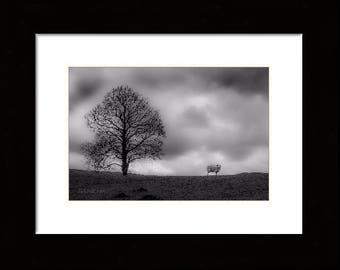 Lonely sheep on the Lancashire moors (framed)