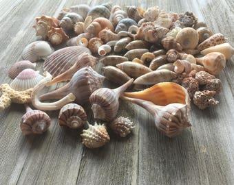10,000 Island Shells