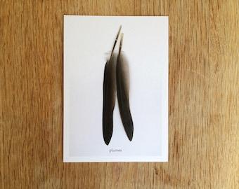 "Postcard ""Feathers"". Ref: PL - 1"