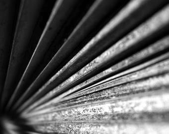 Black and White Photo of Ridges on a Texas Palm Tree Frond IV  // Nature Photography in Austin, Texas