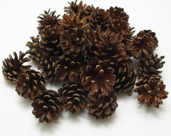 Pine cones 30 pcs, christmas wreath cones, dry natural cones, floristic decoration, wedding decoration, small cones, rustic craft cones #2