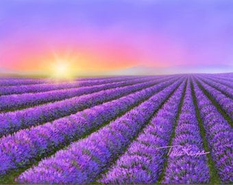 Lavender Field with Sunset 8x10 canvas print
