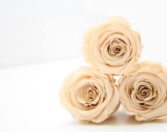 Preserved Champagne Roses that last a year Box of 6 rose heads.