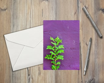 Green Growth against a Bright Purple Wall
