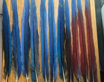 Qty of 11 Long Parrot Macaw Tail Feathers for Jewelry and Crafts