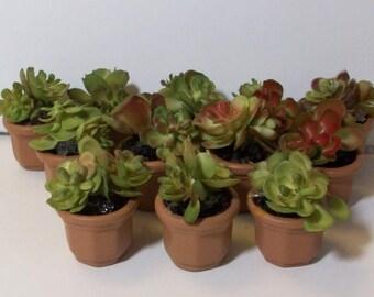 SALE 20% MINIATURES Miniature succulant planter, 2 clay pots for Fairy garden or terrariums
