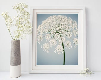 Flower Photography Print, Queen Anne's Lace, Blue, White, Large Wall Art, Fine Art Photograph, Flower Wall Art