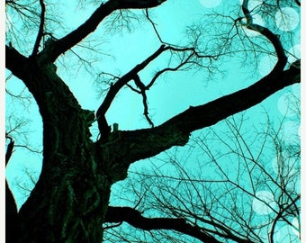 50% OFF SALE Tree Photography,  Nature Picture, Tree Photo, Aqua, Turquoise, Black, Minimalist, Winter, 5x7 inch Print - An Evening to Dream