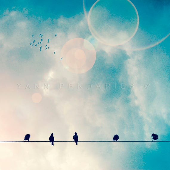 Birds on a wire, Bird print, Animal print, Nature photography, Blue sky print, Blue home decor, Fine art photography