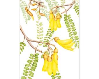 Greeting card - Kowhai (Sophora microphylla) NZ native