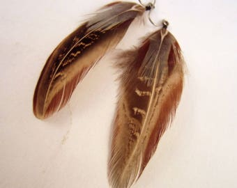 Feather Earrings Ring Neck natural Pheasant