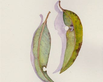 Painting of 2 gum leaves ~ original watercolour art