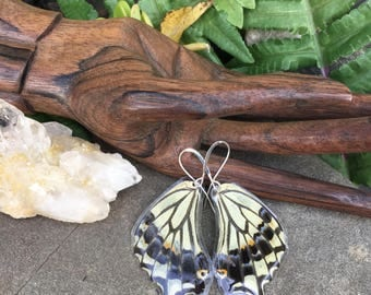 Real Butterfly, Swallowtail Butterfly Wing Earrings, Earthy Organic Jewelry, Natural, Bohemian Jewelry, Hippie, Organic, Unique Gift, BW076