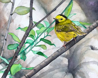 Hooded Warbler - Open edition print of an original watercolor (fits 11x14 frame)