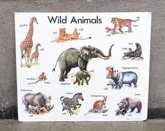 Vintage 1967 20x24 Wild Animals Card