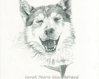 Print of 'Smiling Husky' from original graphite drawing by Sarah Marie Glass