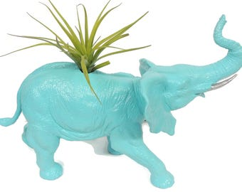 Extra large turquoise elephant planter with large air plant.