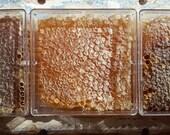 Fair Share Honey - Wild Virgin Honey from Rescued Neighborhood Bees - 4 X 4 Square, Sweet Magic  !