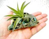 Air Plant Holder, Air Plant planter, tiny planter, green bronze planter, organic shape, hobbit planter, tiny things, hobbit ware
