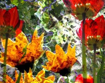 Reflection. Abstract Photography. Art. Nature Art. Home Decor. Photography. Nature Decor. Nature Photography. Digital prints. Digital art.