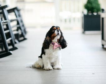 Preppy Gingham Repuplican Bow Tie Dog Collar, Republican Dog Collar, Conservative Dog Collar, Conservative Elephant Dog Collar,