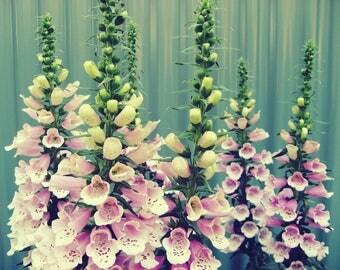 Flower Photography, Pink Foxgloves, Flower Photo, Garden Photography, Fine Art Print, Pink Flower, Floral Photography, photo of foxglove