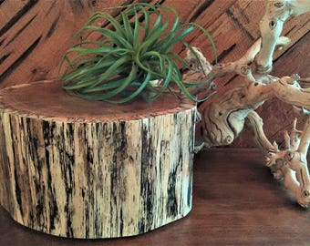 Rustic tree stump - Centerpiece - Wood tree slice - Wedding Centerpiece - Home decor - Candleholder - Plant stand - Pedestal