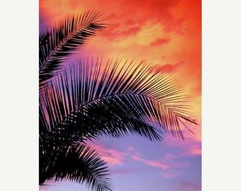 On Sale Trees, Palm Tree, Maui, HI