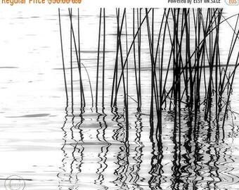"ON SALE Reeds Black and White Fine Art Photography Print. 11"" X 14"" Calming Waters, Reflections"