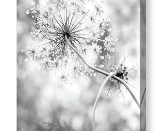 ON SALE Flower Canvas Gallery Wrap, Queen Anne's Lace, Unique Home and Office Decor, Feminine, Black and White Canvas Wall Art, Modern Rusti