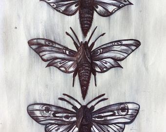 Three Moths Original Ink Drawing on ink, Pant on Papper