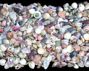 Bulk India Tiny Mix Seashells for Sailor Valentine Craft Wedding Floral Coastal Beach Decor Supplies Accessories Terrariums Photo Prop