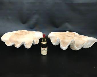 Beautiful Rare Pair Giant Clam Shells