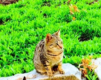 Digital Photo Cat