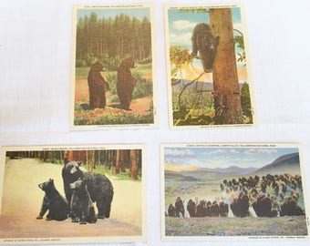 HAYNES STUDIO YELLOWSTONE Postcard Lot of 12