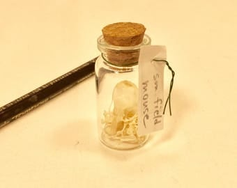 Tiny bottle with a complete field mouse skeleton inside. Perfect for your natural history collection.