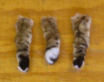 3 Bobcat Tails