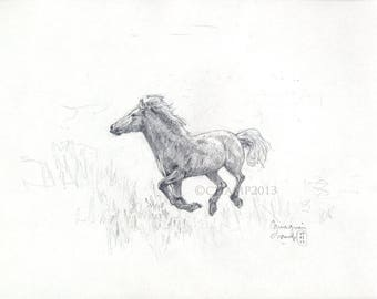 Study of freedom - Camargue horse galloping horse
