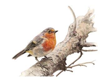 PRINT to order - Robin